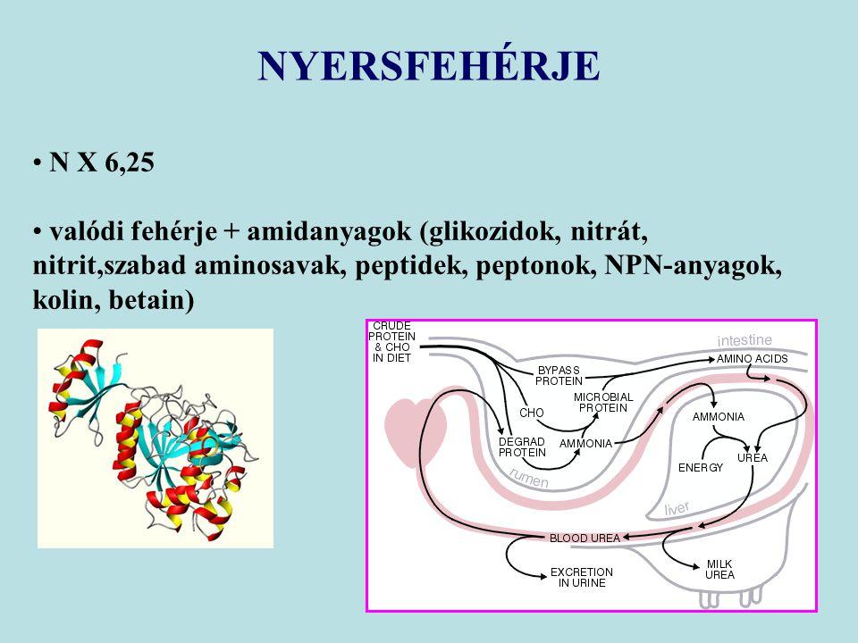 NYERSFEHÉRJE N X 6,25 valódi fehérje + amidanyagok (glikozidok, nitrát, nitrit,szabad aminosavak, peptidek, peptonok, NPN-anyagok, kolin, betain)