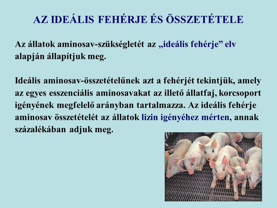 """AZ IDEÁLIS FEHÉRJE ÉS ÖSSZETÉTELE Az állatok aminosav-szükségletét az """"ideális fehérje elv alapján állapítjuk meg."""