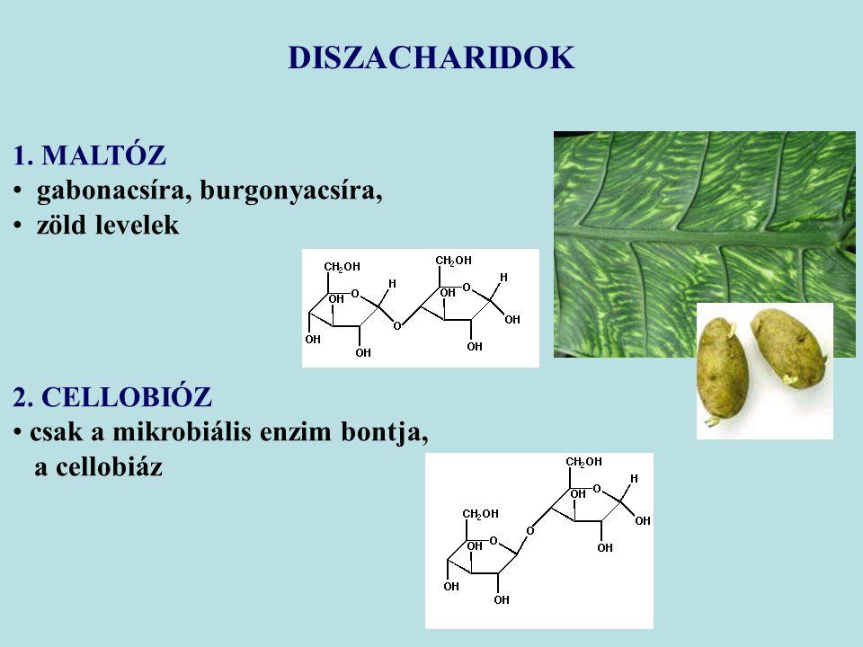 1. MALTÓZ gabonacsíra, burgonyacsíra, zöld levelek 2. CELLOBIÓZ csak a mikrobiális enzim bontja, a cellobiáz DISZACHARIDOK