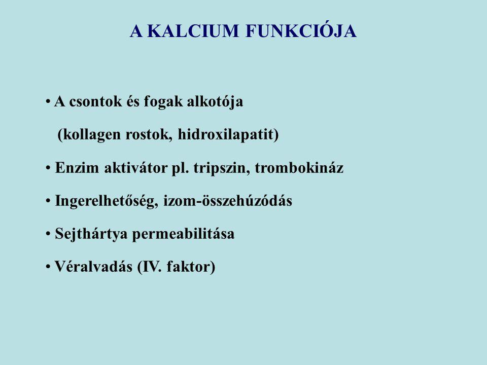 A KALCIUM FUNKCIÓJA A csontok és fogak alkotója (kollagen rostok, hidroxilapatit) Enzim aktivátor pl. tripszin, trombokináz Ingerelhetőség, izom-össze