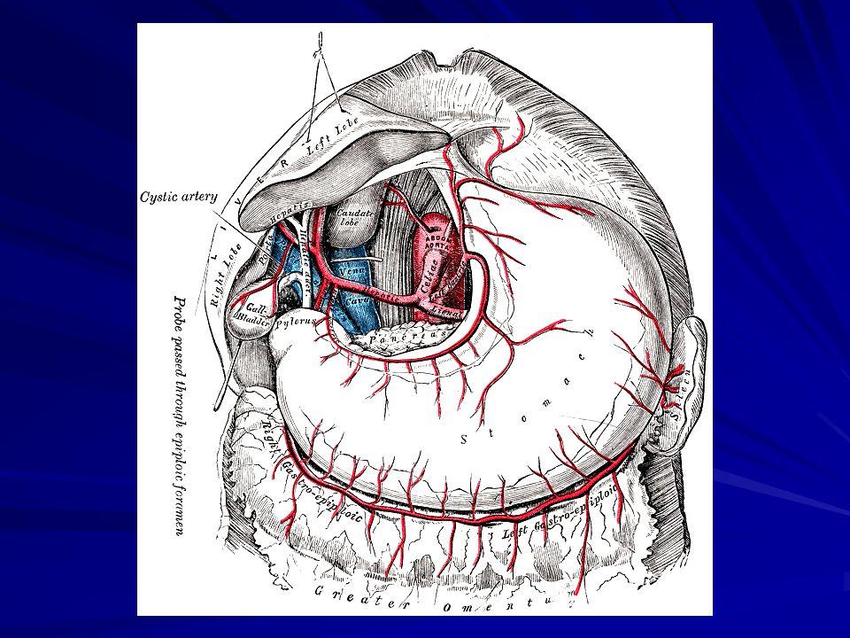 Metastasisok  Lymphogén  perigastricus tér, Virchow lymphogl.