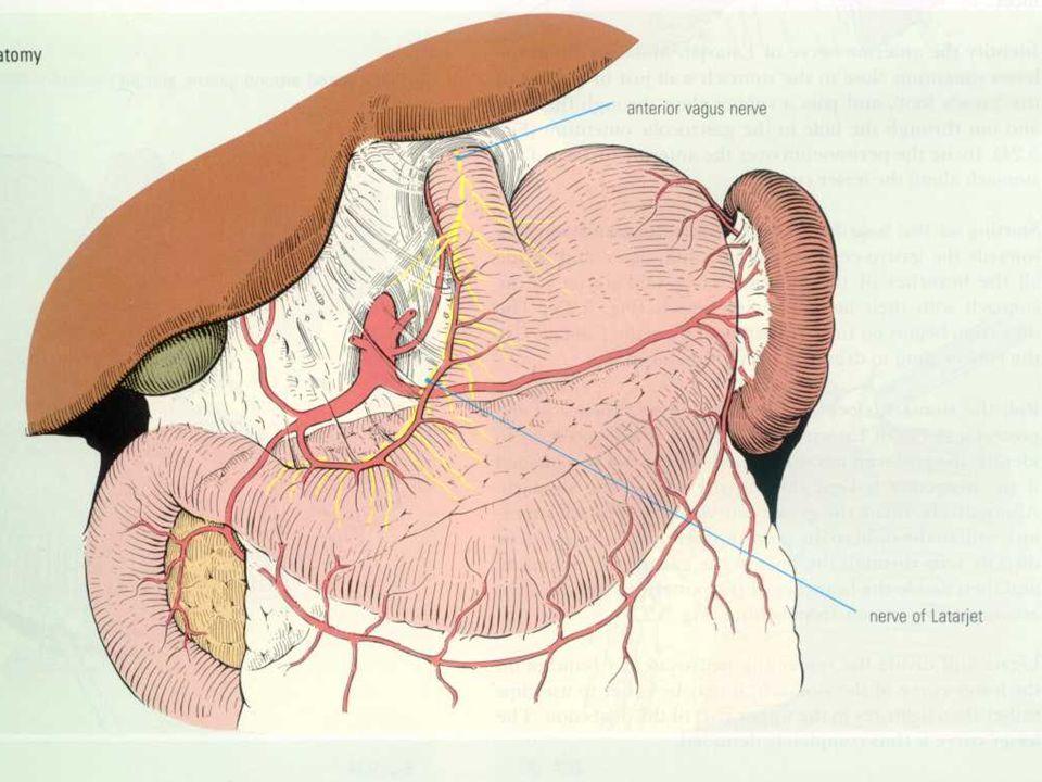 Műtéti kezelés - javallat Abszolút indikációk: perforáció, masszív vérzés, stenosis, malignus elfajulás Relatív indikációk: korrekt konz.