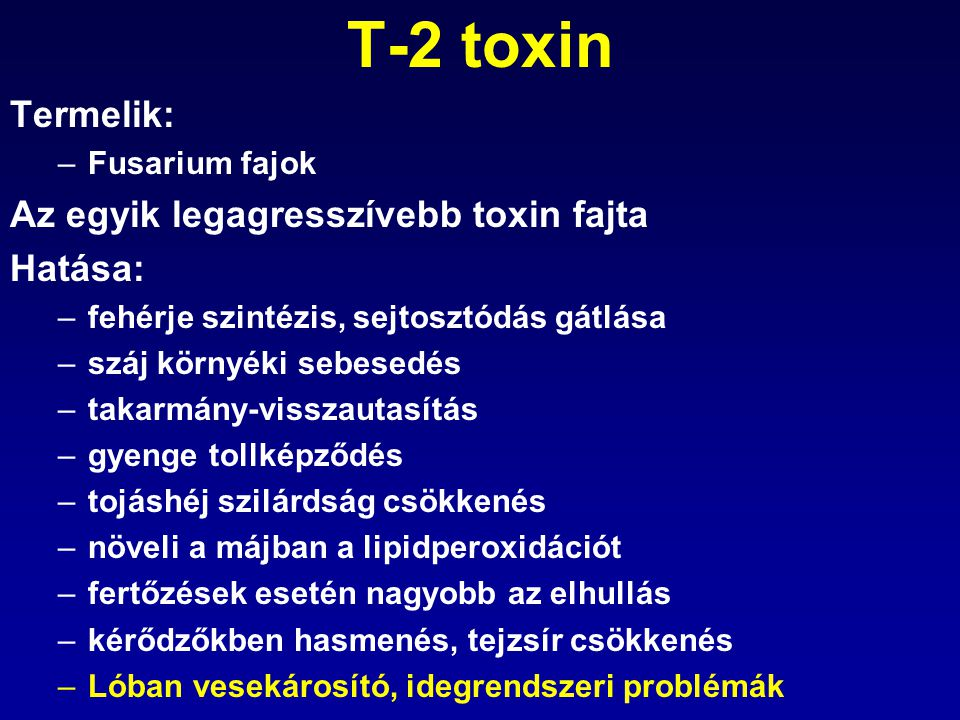 T-2 toxin Termelik: –Fusarium fajok Az egyik legagresszívebb toxin fajta Hatása: –fehérje szintézis, sejtosztódás gátlása –száj környéki sebesedés –ta