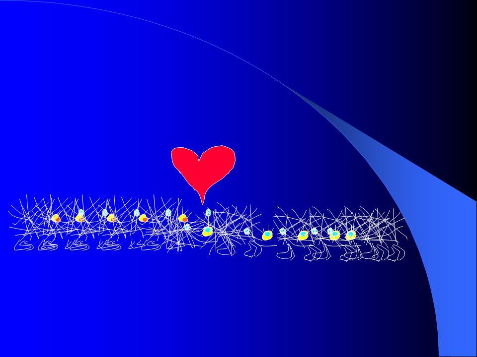 Természetes zonáció  Plankton  Nekton Hínárnövényzet  Mederfenéki algagyep  Alámerült gyökerező hínár  Felszínen kiterülő gyökerező hínár Nyíltvízi élőlény együttes Társulások változása térben adott időben.