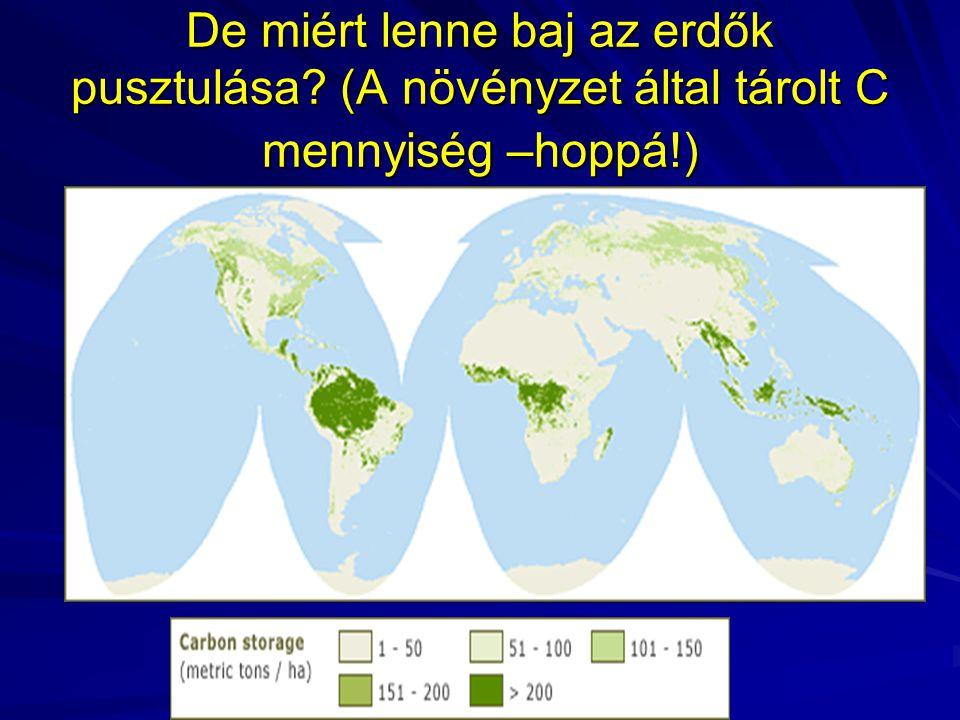 De miért lenne baj az erdők pusztulása? (A növényzet által tárolt C mennyiség –hoppá!)