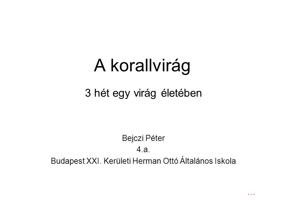 A korallvirág 3 hét egy virág életében Bejczi Péter 4.a. Budapest XXI. Kerületi Herman Ottó Általános Iskola …