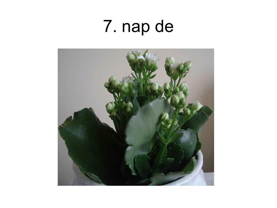 7. nap de