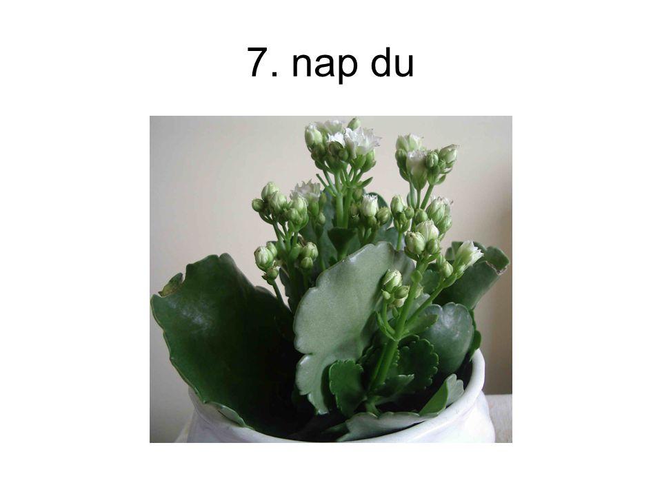 7. nap du