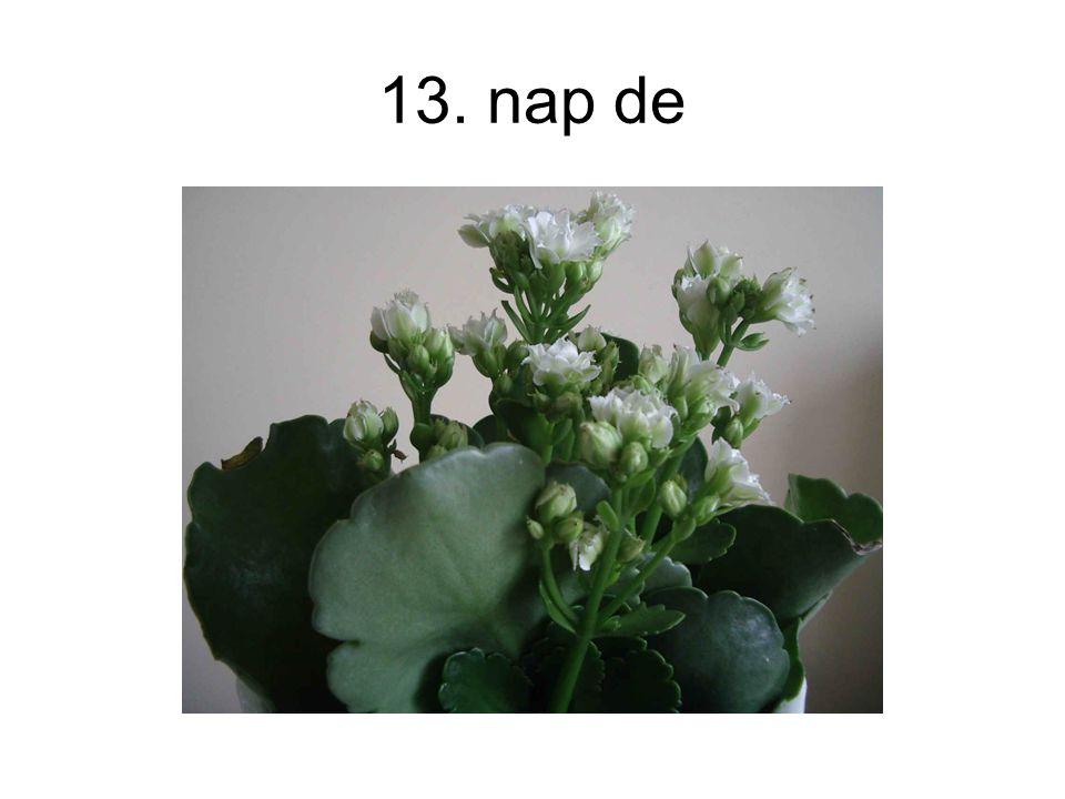 13. nap de