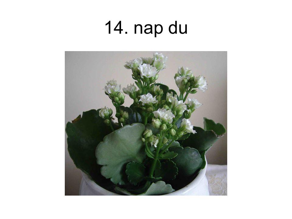 14. nap du