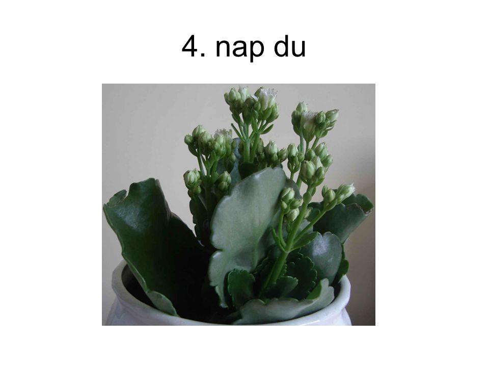 4. nap du