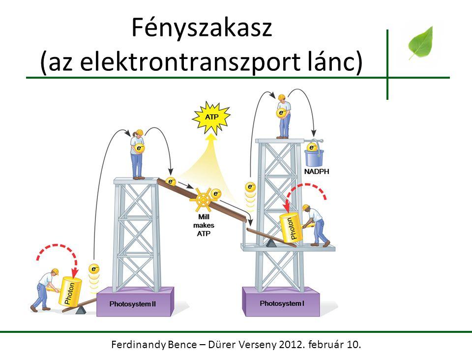 Ferdinandy Bence – Dürer Verseny 2012. február 10. Fényszakasz (az elektrontranszport lánc)