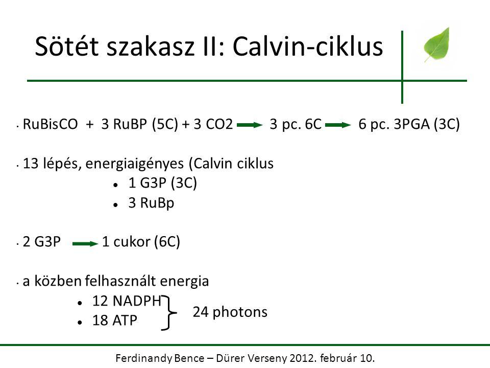 Ferdinandy Bence – Dürer Verseny 2012. február 10. Sötét szakasz II: Calvin-ciklus RuBisCO + 3 RuBP (5C) + 3 CO2 3 pc. 6C 6 pc. 3PGA (3C) 13 lépés, en