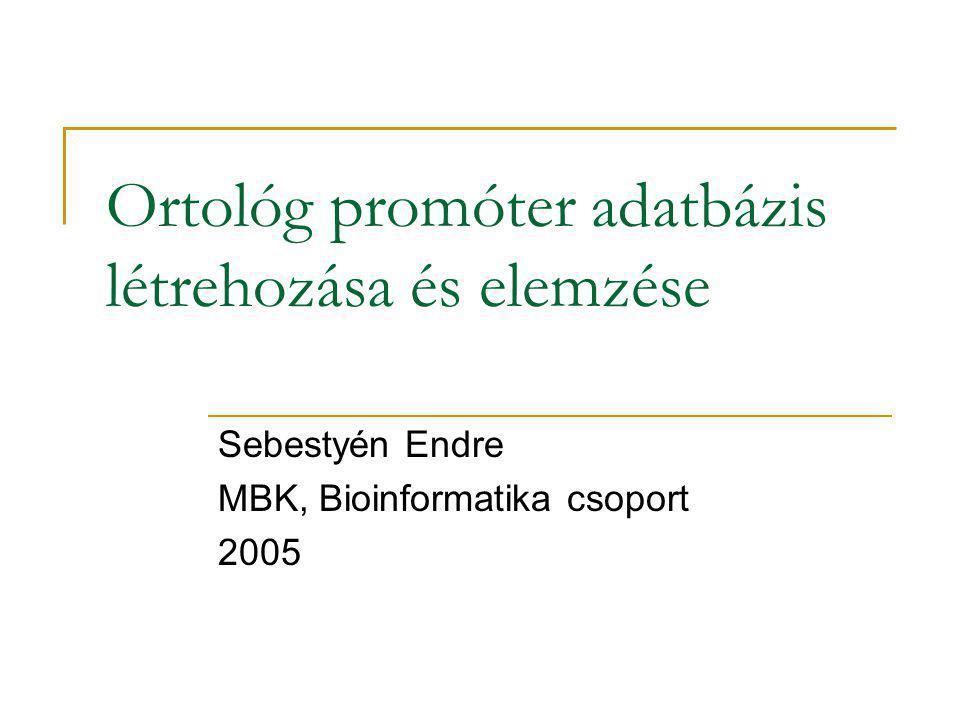 Ortológ promóter adatbázis létrehozása és elemzése Sebestyén Endre MBK, Bioinformatika csoport 2005