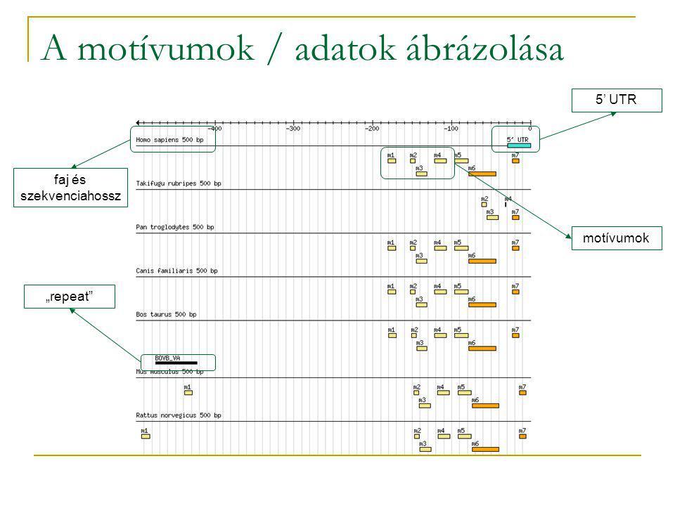 """A motívumok / adatok ábrázolása faj és szekvenciahossz """"repeat 5' UTR motívumok"""