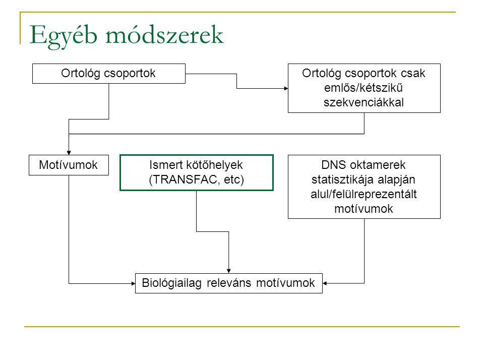 Egyéb módszerek Ortológ csoportokOrtológ csoportok csak emlős/kétszikű szekvenciákkal Motívumok Ismert kötőhelyek (TRANSFAC, etc) DNS oktamerek statisztikája alapján alul/felülreprezentált motívumok Biológiailag releváns motívumok