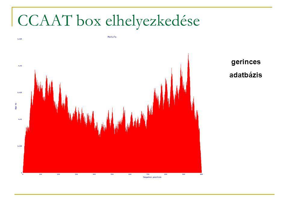 CCAAT box elhelyezkedése gerinces adatbázis