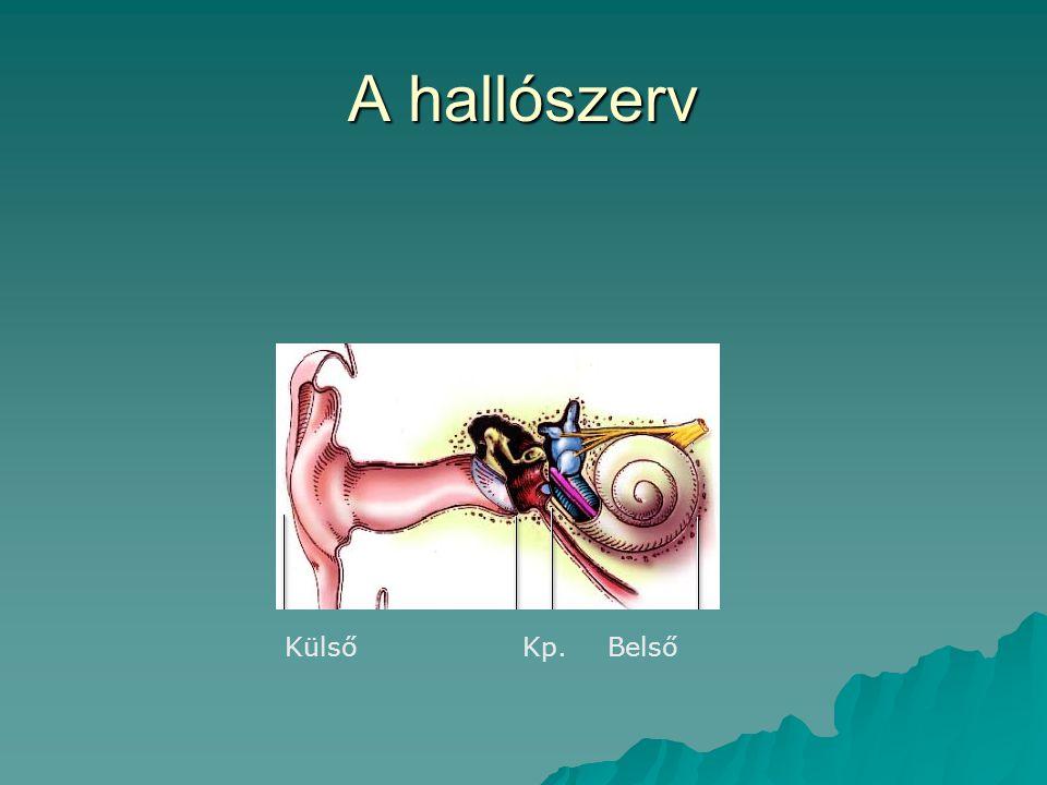 A hallószerv Külső Kp. Belső