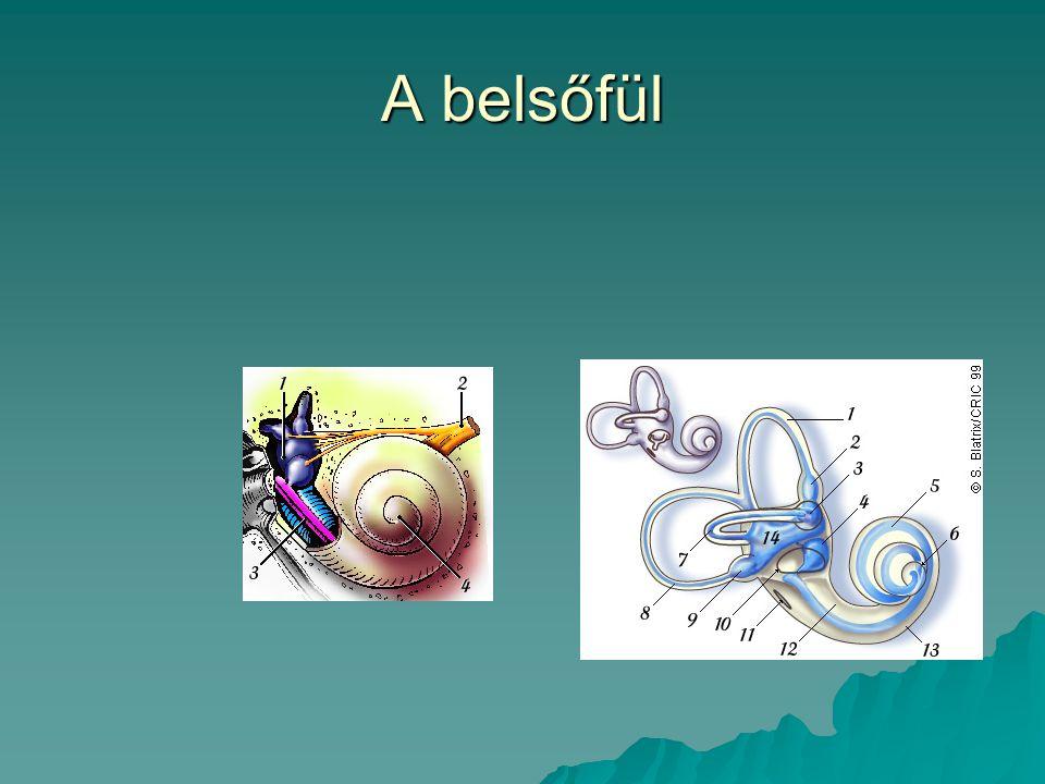 A centrális hallórendszer