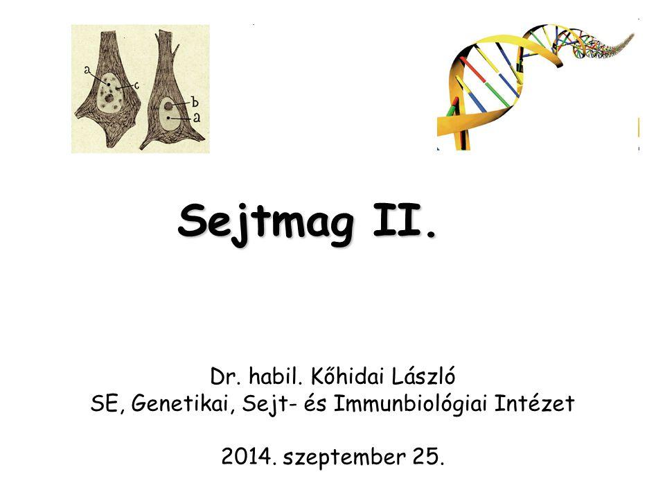 Sejtmag II. Dr. habil. Kőhidai László SE, Genetikai, Sejt- és Immunbiológiai Intézet 2014. szeptember 25.