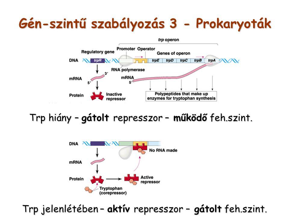 Gén-szintű szabályozás 3 - Prokaryoták Trp jelenlétében – aktív represszor – gátolt feh.szint. Trp hiány – gátolt represszor – működő feh.szint.