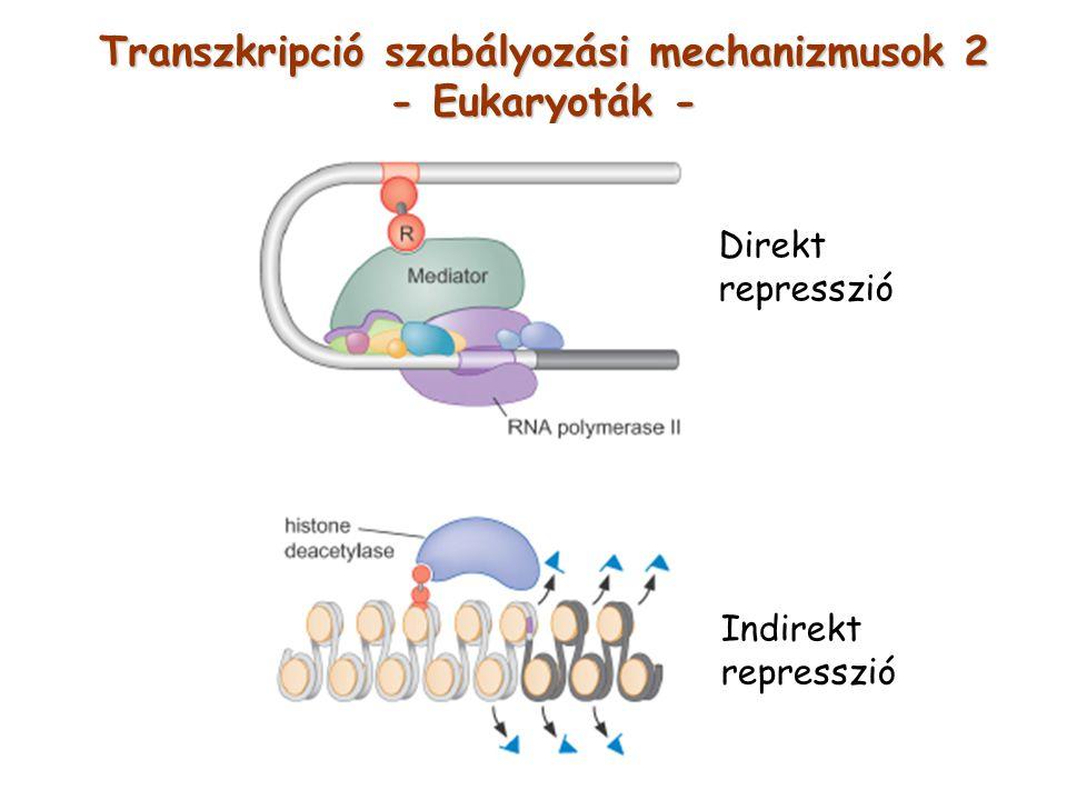Transzkripció szabályozási mechanizmusok 2 - Eukaryoták - Direkt represszió Indirekt represszió