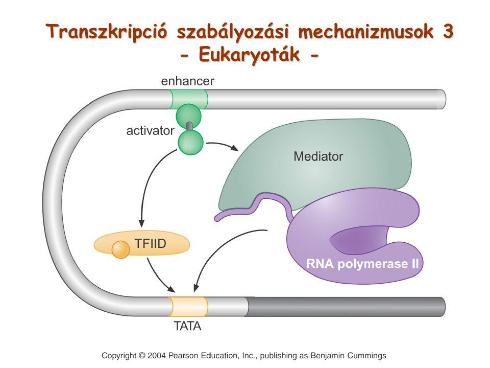 Transzkripció szabályozási mechanizmusok 3 - Eukaryoták -