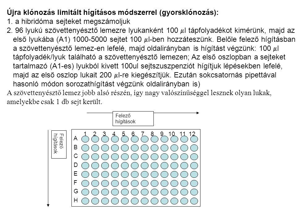 Felező hígítások Újra klónozás limitált hígításos módszerrel (gyorsklónozás): 1. a hibridóma sejteket megszámoljuk 2. 96 lyukú szövettenyésztő lemezre