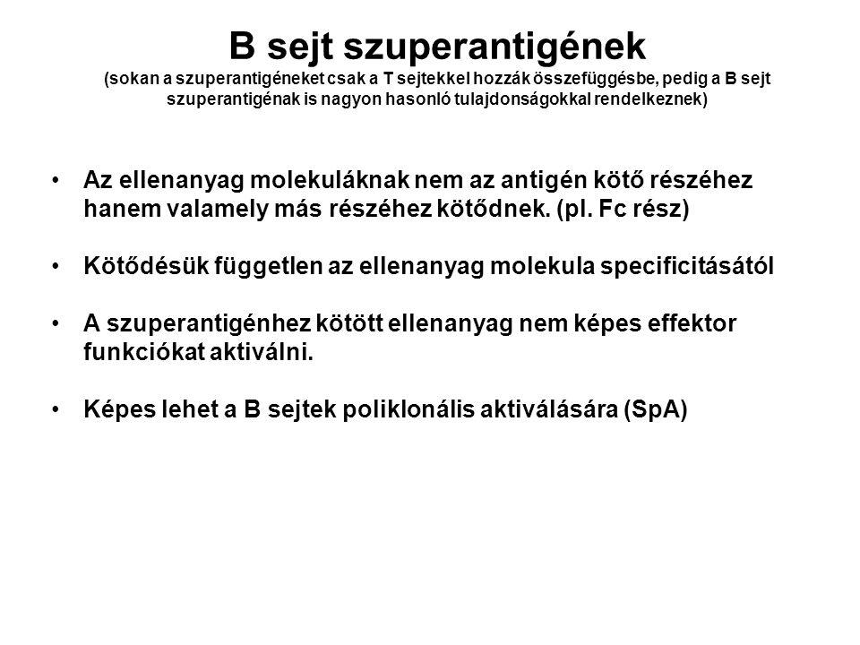 B sejt szuperantigének (sokan a szuperantigéneket csak a T sejtekkel hozzák összefüggésbe, pedig a B sejt szuperantigénak is nagyon hasonló tulajdonsá