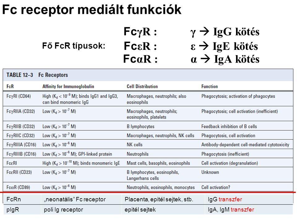 """Fc receptor mediált funkciók Fc γR : Fc εR : Fc αR : γ  IgG kötés ε  IgE kötés α  IgA kötés FcRn""""neonatális"""" Fc receptorPlacenta, epitél sejtek, st"""