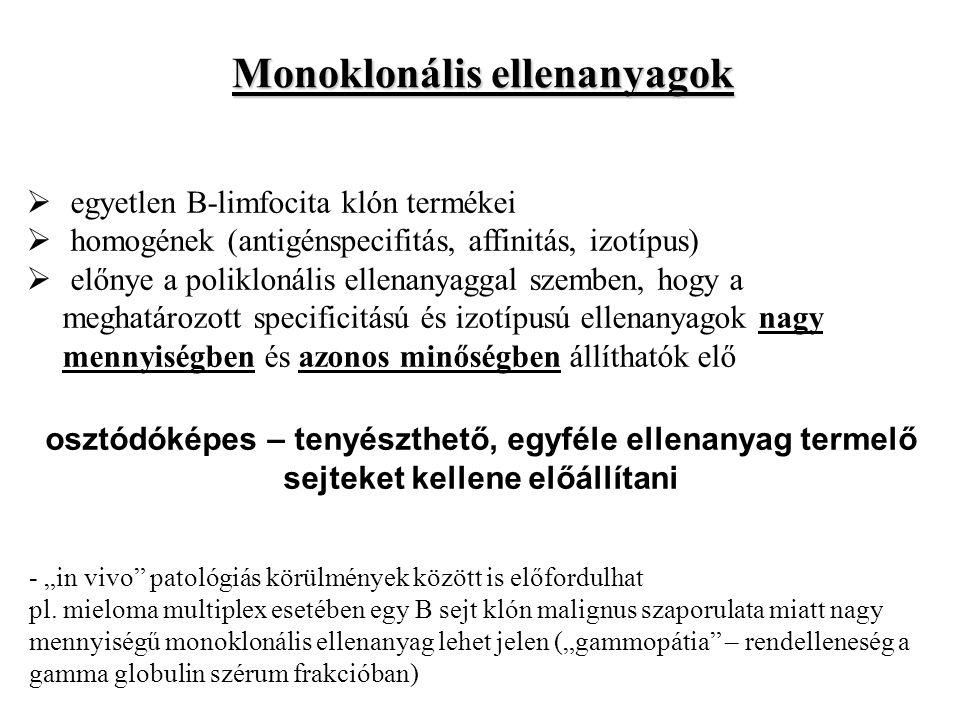Monoklonális ellenanyagok  egyetlen B-limfocita klón termékei  homogének (antigénspecifitás, affinitás, izotípus)  előnye a poliklonális ellenanyag