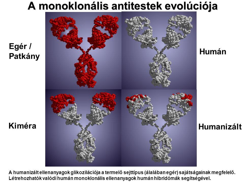 A monoklonális antitestek evolúciója Egér / Patkány Kiméra Humán Humanizált A humanizált ellenanyagok glikozilációja a termelő sejttípus (álalában egé