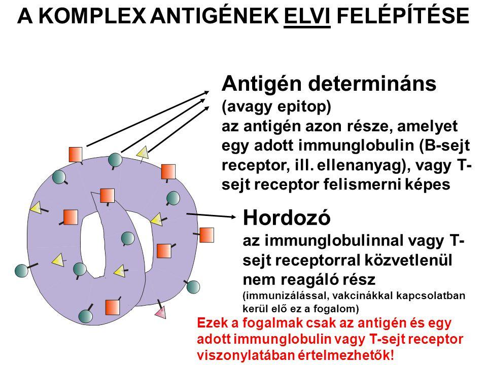 Immunszuppresszív ellenanyagok 1.Anti-TNF-α antitestek infliximab (Remicade): 1998 óta, kiméra adalimumab (Humira): 2002, rekombináns humán 2.Etanercept (Enbrel) – dimer fúziós fehérje, TNF-α receptor + Ig Fc-vég (Nem monoklonális antitest, csak Ig Fc-véget tartalmaz!) Anti-TNF-α terápia indikációi: Rheumatoid arthritis Spondylitis ankylopoetica (SPA - M.