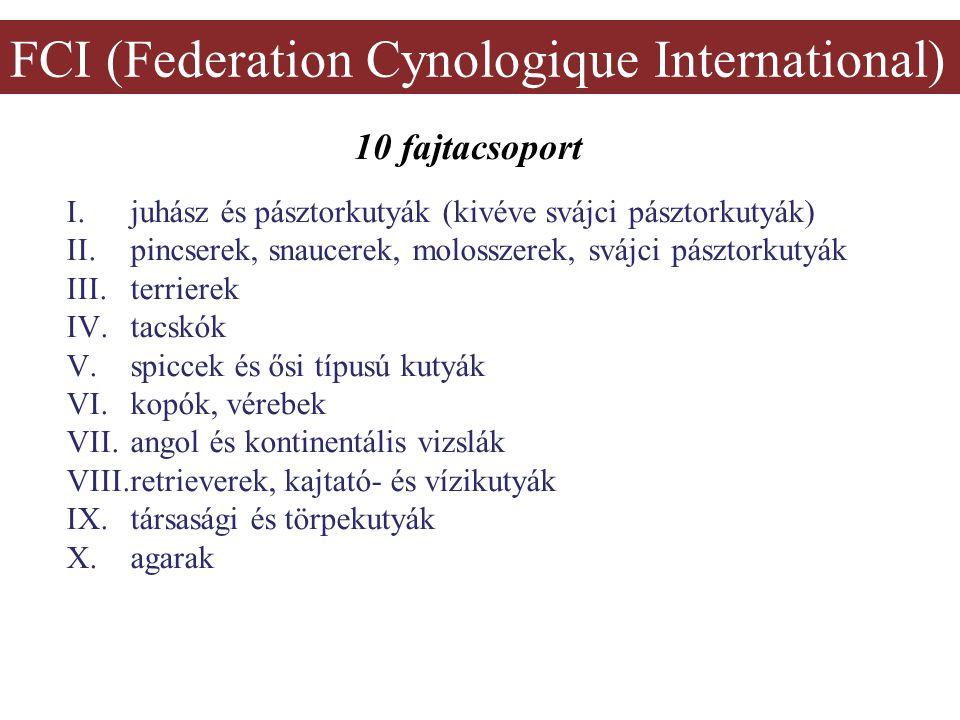 FCI (Federation Cynologique International) 10 fajtacsoport I.juhász és pásztorkutyák (kivéve svájci pásztorkutyák) II.pincserek, snaucerek, molosszerek, svájci pásztorkutyák III.terrierek IV.tacskók V.spiccek és ősi típusú kutyák VI.kopók, vérebek VII.angol és kontinentális vizslák VIII.retrieverek, kajtató- és vízikutyák IX.társasági és törpekutyák X.agarak