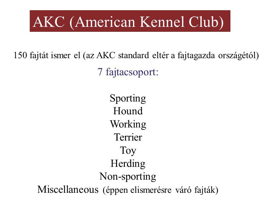 AKC (American Kennel Club) 150 fajtát ismer el (az AKC standard eltér a fajtagazda országétól) 7 fajtacsoport: Sporting Hound Working Terrier Toy Herding Non-sporting Miscellaneous (éppen elismerésre váró fajták)