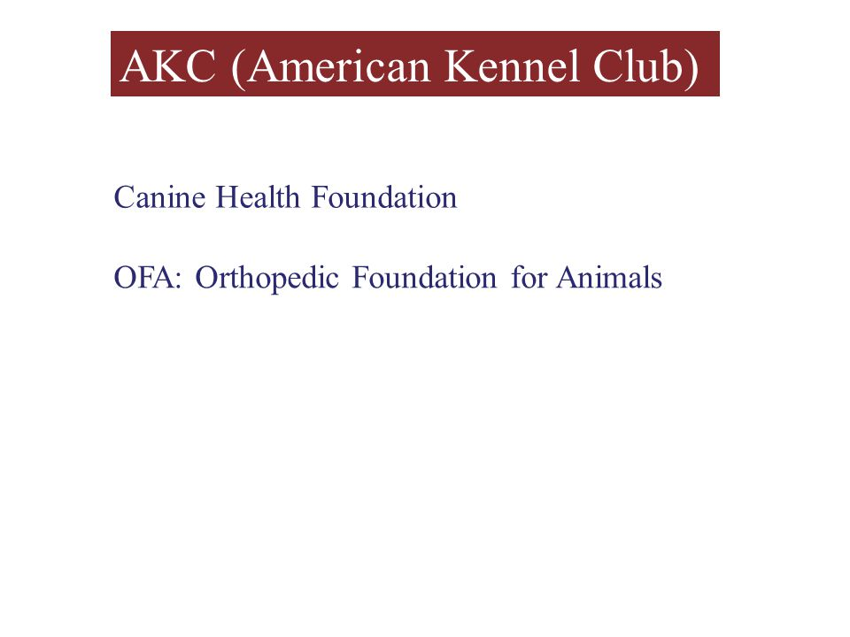 AKC (American Kennel Club) Canine Health Foundation OFA: Orthopedic Foundation for Animals