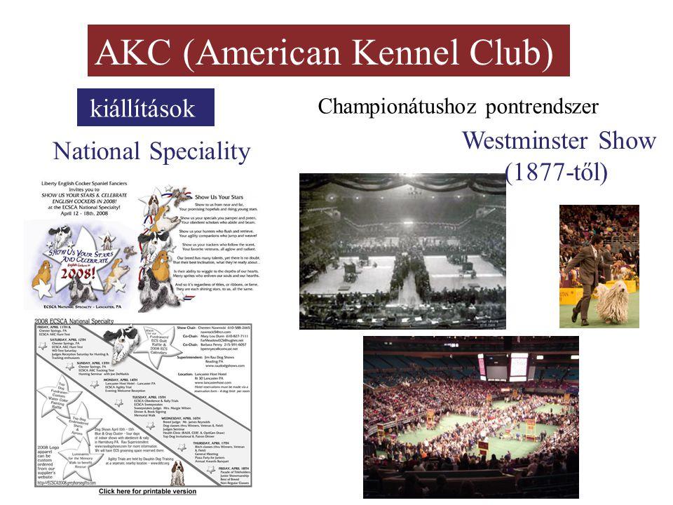 AKC (American Kennel Club) kiállítások National Speciality Championátushoz pontrendszer Westminster Show (1877-től)