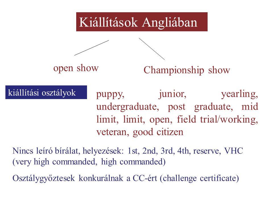 Kiállítások Angliában open show Championship show kiállítási osztályok puppy, junior, yearling, undergraduate, post graduate, mid limit, limit, open,