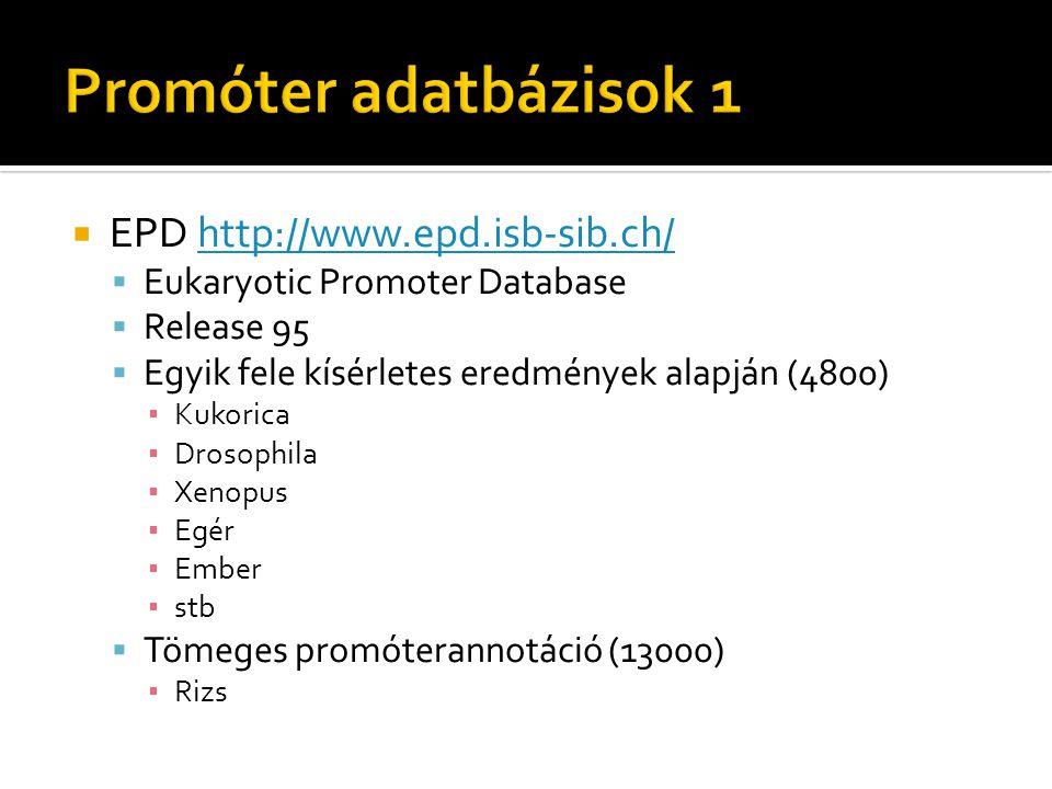 EPD http://www.epd.isb-sib.ch/http://www.epd.isb-sib.ch/  Eukaryotic Promoter Database  Release 95  Egyik fele kísérletes eredmények alapján (4800) ▪ Kukorica ▪ Drosophila ▪ Xenopus ▪ Egér ▪ Ember ▪ stb  Tömeges promóterannotáció (13000) ▪ Rizs