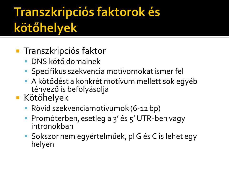  Transzkripciós faktor  DNS kötő domainek  Specifikus szekvencia motívomokat ismer fel  A kötődést a konkrét motívum mellett sok egyéb tényező is