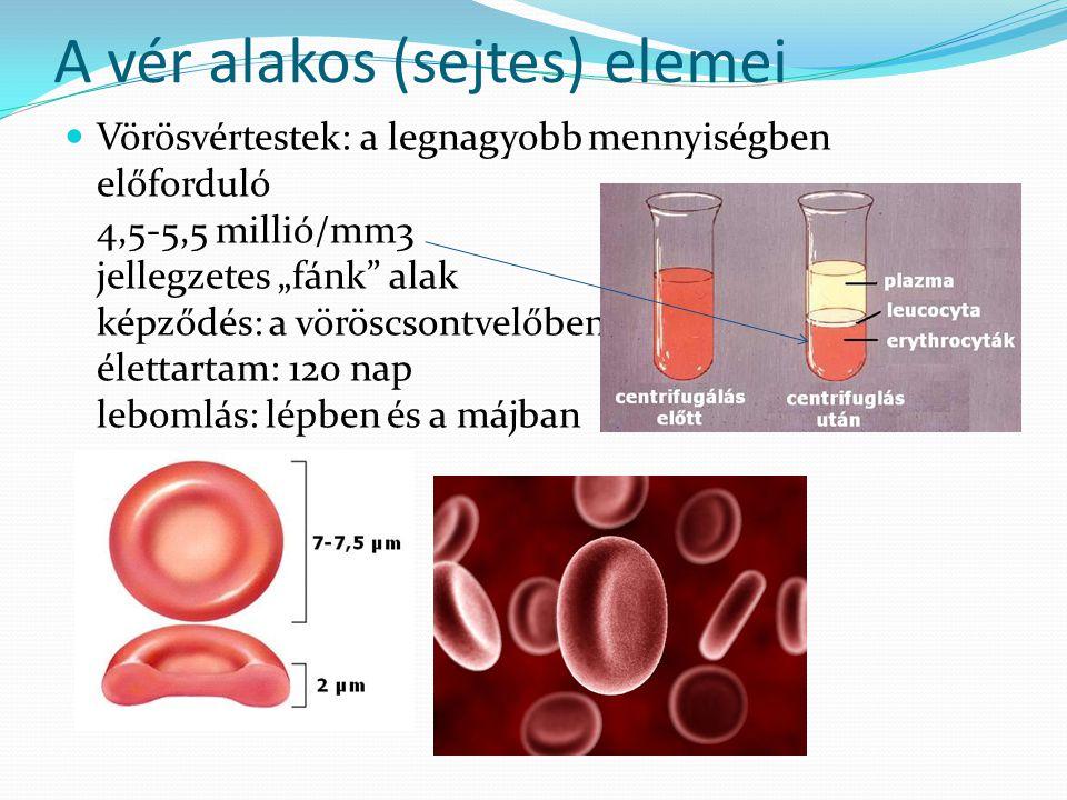 """A vér alakos (sejtes) elemei Vörösvértestek: a legnagyobb mennyiségben előforduló 4,5-5,5 millió/mm3 jellegzetes """"fánk"""" alak képződés: a vöröscsontvel"""