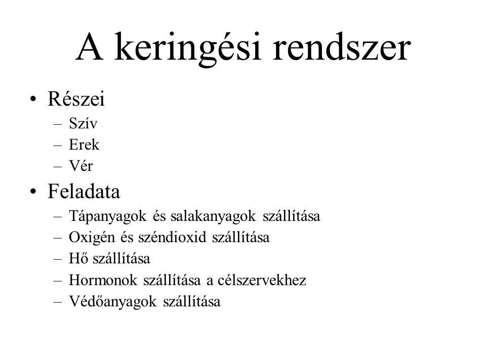 Szív (cor) Kb.