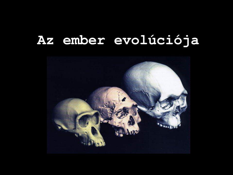 Az emberszerűek kiválása a keskenyorrú osztagból Harmadidőszak (miocén) – 25-30 M éve Emberszerű ősmajmok sokféle változata D,K-Afrika (sok), (Aegyptopithecus, Dryopithecus,??) Melyik lehet az ember és emberszebású majmok közös őse.