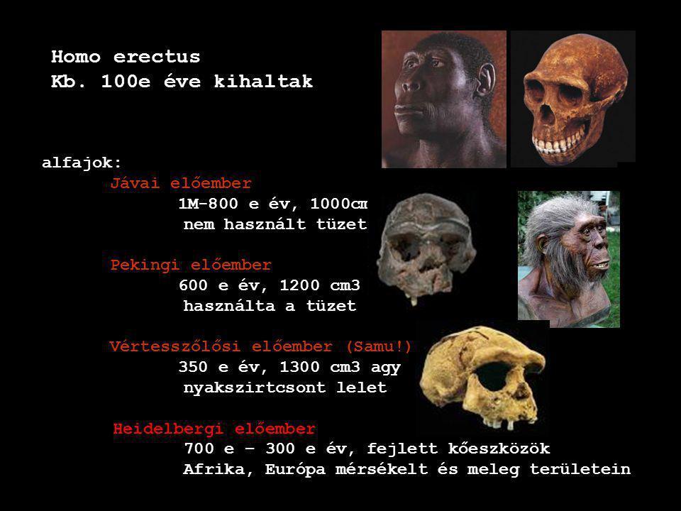 Homo erectus Kb. 100e éve kihaltak alfajok: Jávai előember 1M-800 e év, 1000cm3 nem használt tüzet Pekingi előember 600 e év, 1200 cm3 agy használta a
