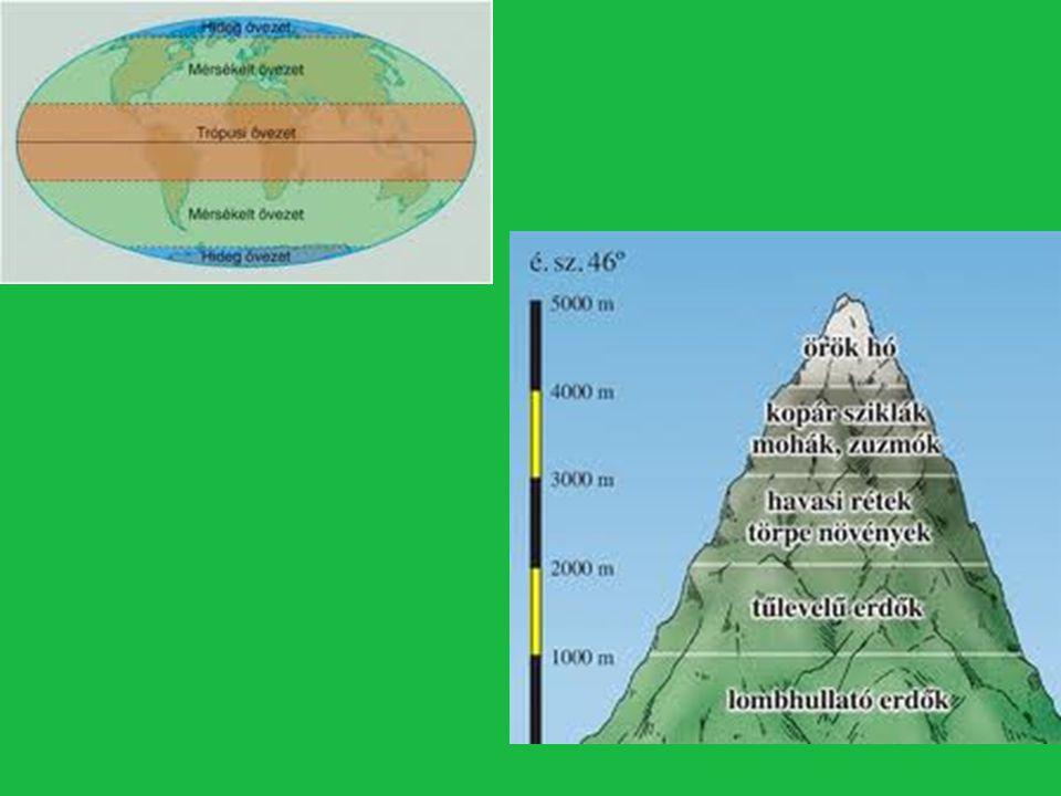 Növényzeti övek- nemcsak az Egyenlítőtől távolodva alakulnak ki, hanem a magashegységekben felfelé haladva is.