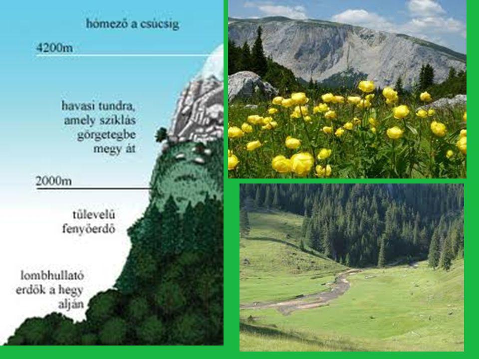 Fenyvesek fölött a tundrához hasonló Növények találhatók -Sűrű párnákat alkotnak, a hideg és a -Szél roncsoló és szárító hatása ellen