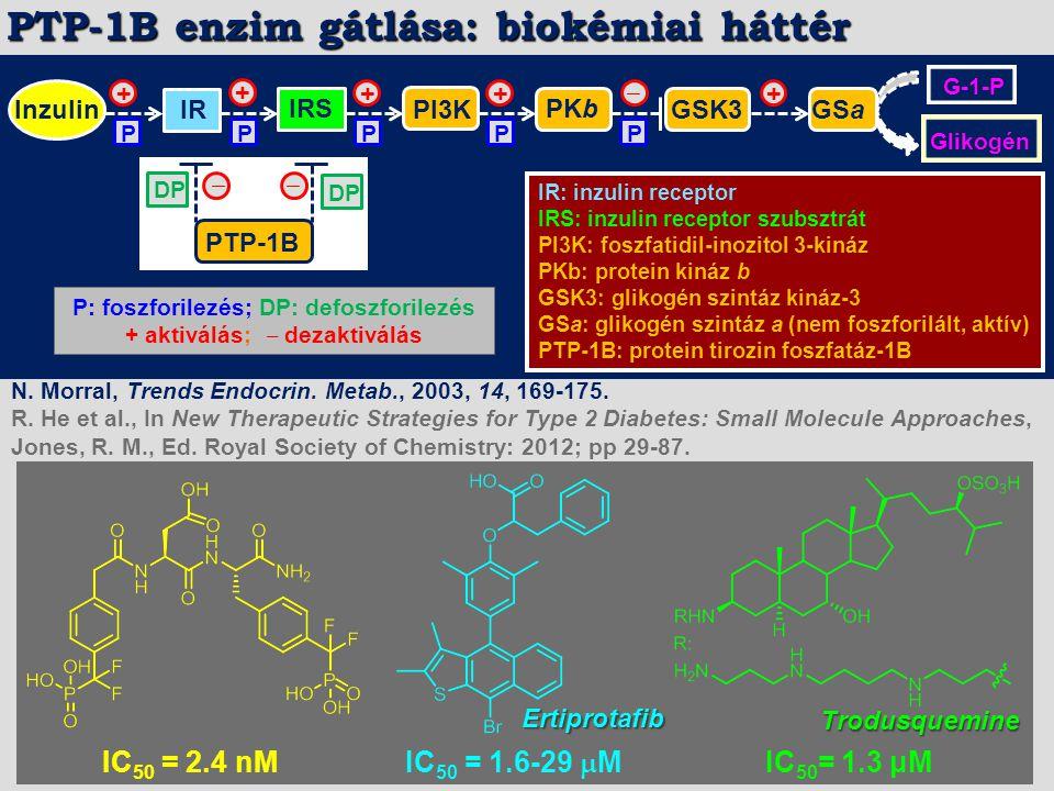 InzulinIR IRS PI3K PKb GSK3 + P ‒ GSa G-1-P Glikogén PTP-1B DP + ++ ‒‒ P P P P + IR: inzulin receptor IRS: inzulin receptor szubsztrát PI3K: foszfatid
