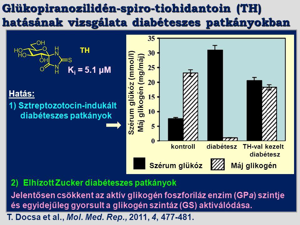 TH 1) Sztreptozotocin-indukált diabéteszes patkányok Hatás: 2) Elhízott Zucker diabéteszes patkányok Jelentősen csökkent az aktív glikogén foszforiláz