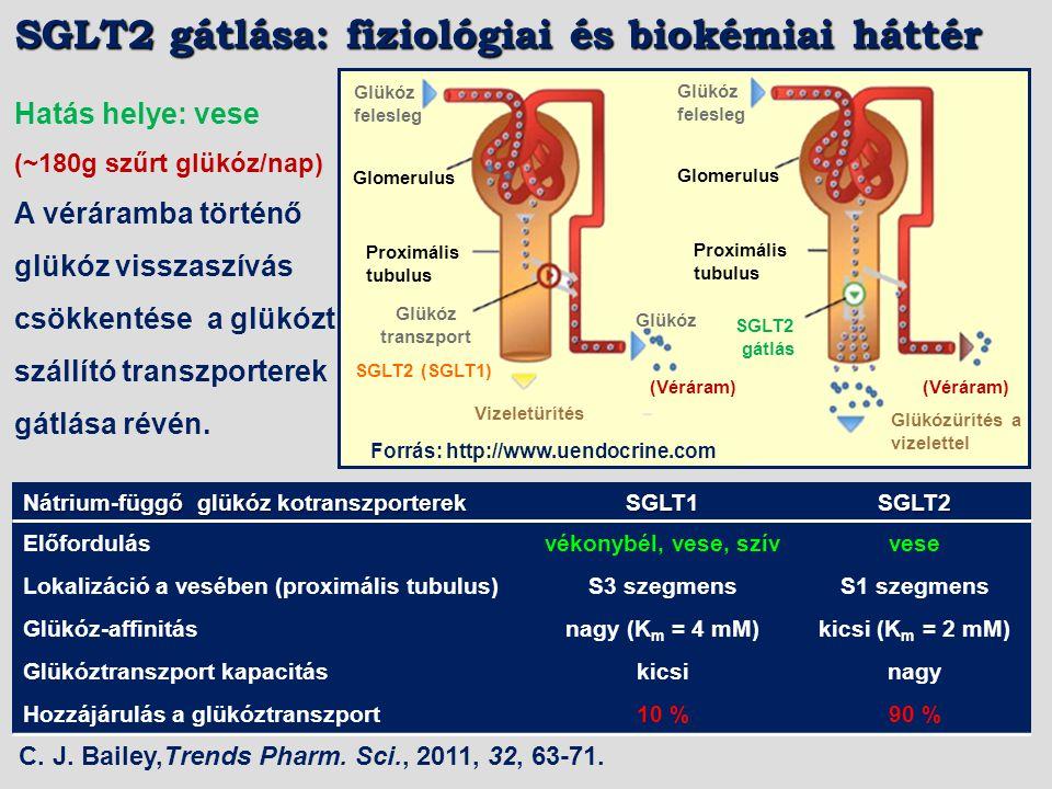 Hatás helye: vese (SGLT: sodium dependent glucose cotransporter) (~180g szűrt glükóz/nap) A véráramba történő glükóz visszaszívás csökkentése a glükóz