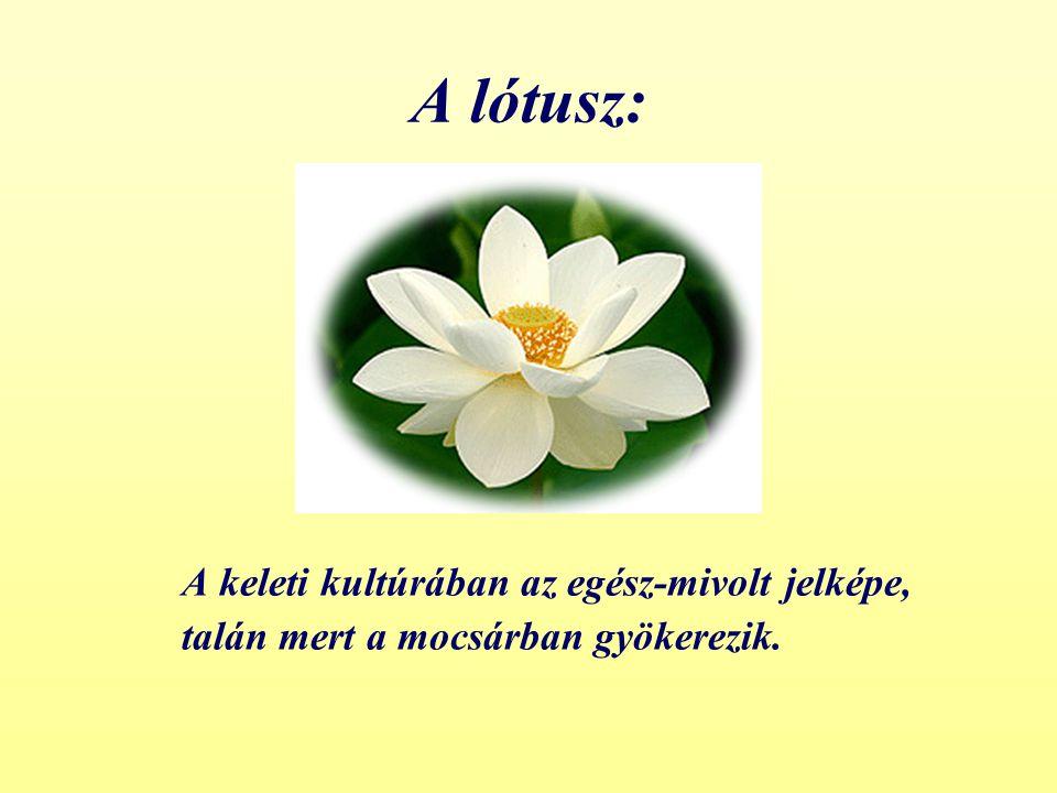 A lótusz: A keleti kultúrában az egész-mivolt jelképe, talán mert a mocsárban gyökerezik.